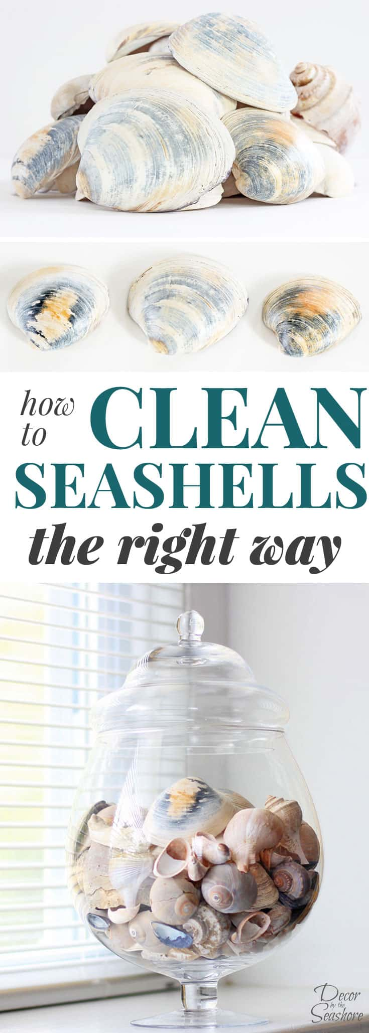 how to clean seashells the right way decor by the seashore